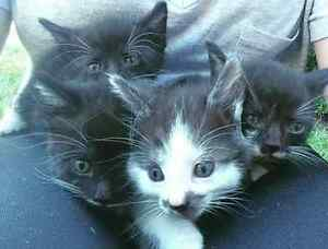 4 adorable kittens need homes!