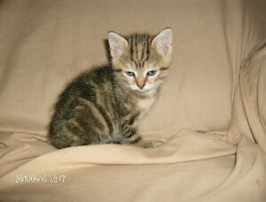 kittens males and females