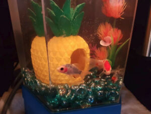 3 goldfish (different types) for rehoming to bigger aquarium