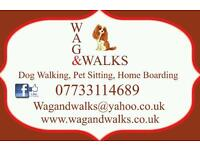 Dog walking, home boarding, pet sitter and more