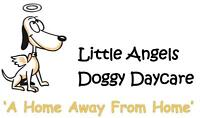 Doggy Daycare and Kennel Free Boarding Services