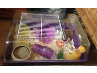 Hamster & Cage