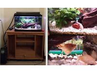 All inclusive TROPICAL FISH TANK (including fish and cabinet)