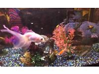 Fish free to good home