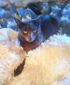 """Young Male Cat - Domestic Short Hair: """"Ozzie and Harriet"""""""