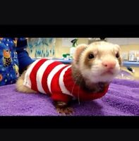 Looking for a ferret!! :D