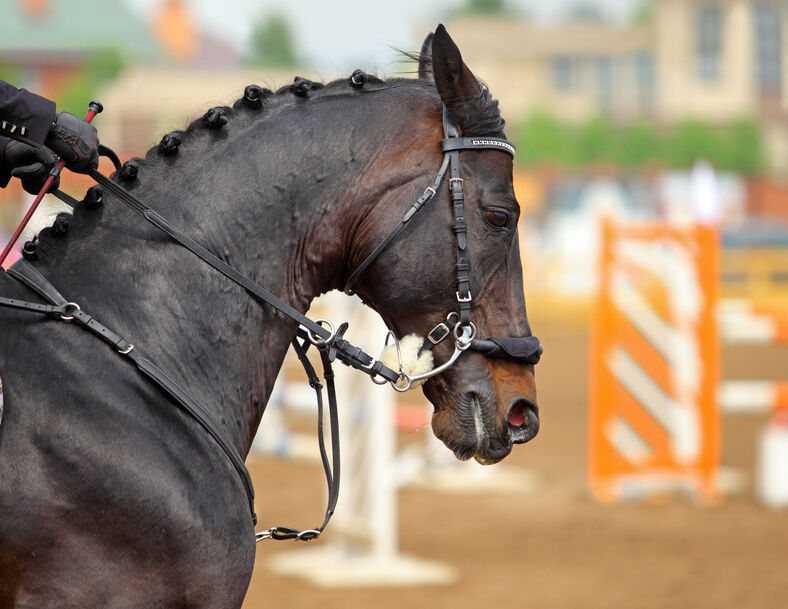 A Bit Different: A Look at Bitless Bridles and Hackamores ...