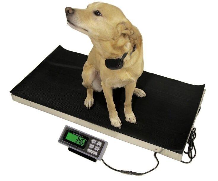 700 LB 38x20 VETERINARY SCALE ANIMAL PET DIGITAL DOG PET GOAT 4H SHEEP PIG VET