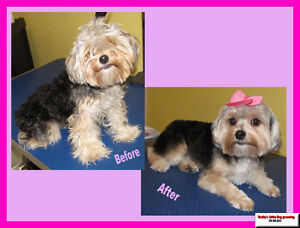 Shelly's Little Dog Grooming Regina Regina Area image 5