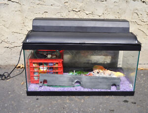 15 gallon fish tank with plenty of accessories