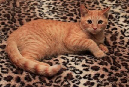 Little Paws Kitten Rescue - Rupert Jimboomba Logan Area Preview