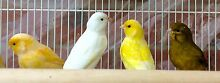Various birds from $ 3 each Rowville Knox Area Preview