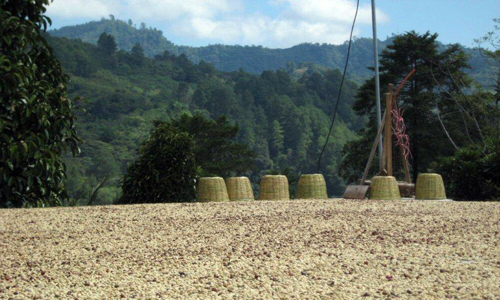 100% Hawaiian Kona - GROUND Coffee - ONE POUND Bag Medium Roasted Every Day! 10