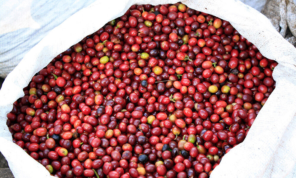 Mexican Oaxaca Coffee Whole Beans Gourmet Medium Roasted Daily 2 - 1 Pound Bags 7