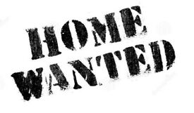 Wanted very urgently property to rent before the 5th November !!!!!!!!!