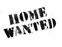 Wanted very urgently property to rent