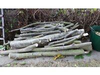 Quantity of Walnut tree logs