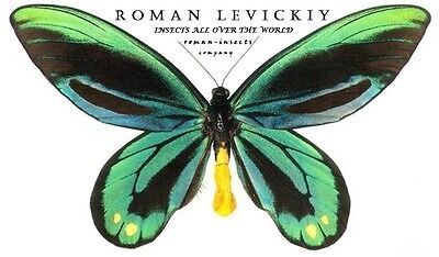roman-insects