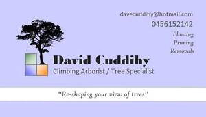 David Cuddihy Trees Melville Melville Area Preview