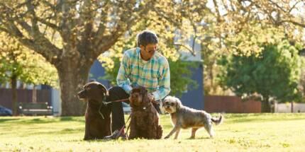 Dog Walker in City of Stonnington
