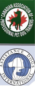 In depth dog analysis and diagnostic report for free!