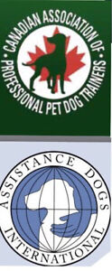 Dog lovers needed for dog diagnostic exam for research!