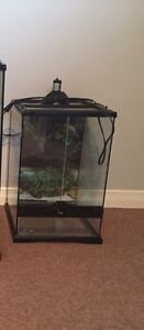 Mini tall terrarium for sale