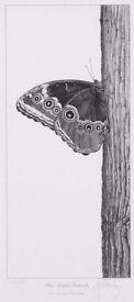 Gary Hodges Blue Morpho Butterfly