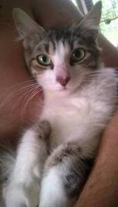 RESCUED: desexed, vaccinated, wormed, flea treated Waratah Newcastle Area Preview