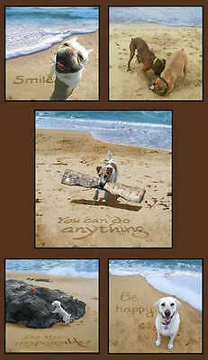 Sand Scribbles Dog Days on the Beach Panel  24 by 44 inches cotton ()