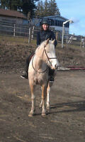 16.1 palamino tennessee walker mare for adoption