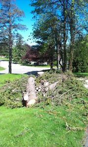 Tree Removal, Tree Pruning and stump grinding Cambridge Kitchener Area image 3
