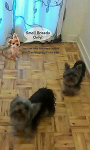 Fun,safe,cage-free home for SMALL dogs CPR certified trainer West Island Greater Montréal image 5