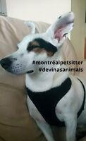 pension a mileu familiale pour chiens sans cages no cage dogsit