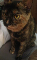 Free 3yr old kitty to loving forever home