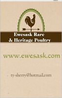 May 23rd Aberdeen, SK rare and exotic Sale