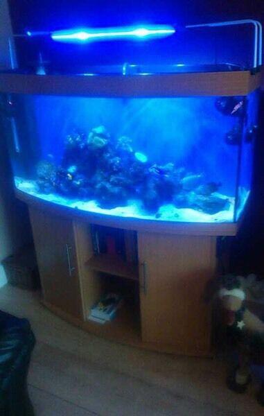 Juwel vision 260L fish tank