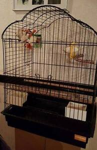 Large Bird Cage with dishes and toys