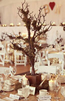 RUSTIC & TALL MANZANITA TREES CENTREPIECE - WEDDING OR EVENT