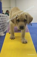 Solid Foundation Puppy Class - Starts June 8th!! 2 spots left!!