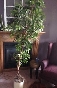 Artificial FIG TREE, almost 8 ft, tall/skinny, good shape, $10