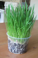 Organic Microgreen Kits and Seeds For Sprouting!