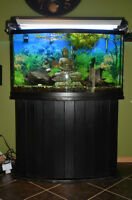 What an awesome deal on a fish tank!