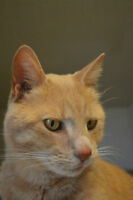 Knox-Oromocto and Area SPCA