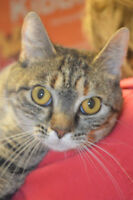 Rosa-Oromocto and Area SPCA