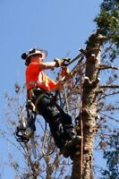 Tree and Lawn Maintenance and Tree Removal and more