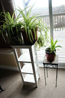 White Four Tier Plant Stand