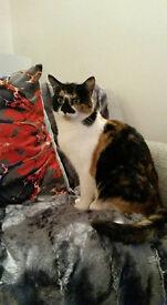 LOST CAT CUMBERNAULD