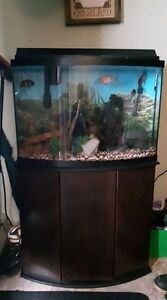 36 Gallon Bow Front Aquarium and stand for sale