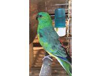 Beautiful birds for sale